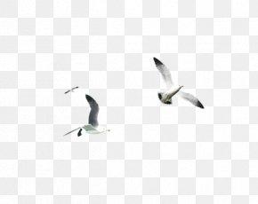 Flying Bird Element - Water Bird Beak Font PNG