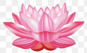 Vector Lotus - Nelumbo Nucifera Water Lily Euclidean Vector Clip Art PNG