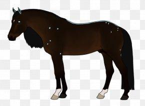 Dream Catcher - Horse Tack Stallion Pony Bridle PNG