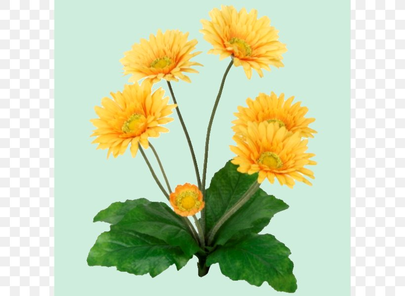 Common Sunflower Transvaal Daisy Yellow Plant Stem, PNG, 600x600px, Flower, Annual Plant, Blue, Calendula, Chrysanthemum Download Free