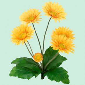 Flower - Common Sunflower Transvaal Daisy Yellow Plant Stem PNG