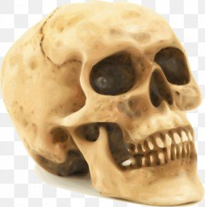 Scary Skull - Skull Human Skeleton Clip Art PNG