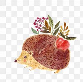 Hedgehog - Hedgehog Royalty-free Euclidean Vector Illustration PNG