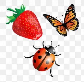 Strawberry Butterfly And Ladybug - Beetle Ladybird Clip Art PNG