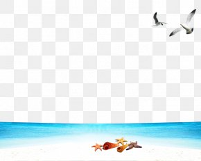 Seagull Beach Free Buckle Material - Seagull Beach Wallpaper PNG