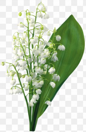 Lily Of The Valley - Lily Of The Valley 1 May Flower PNG