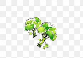 Cauliflower - Chinese Broccoli Cauliflower Vegetable PNG