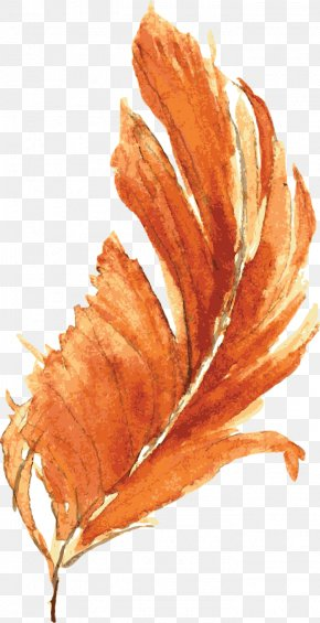 Drawing Vector Orange Feather - Orange Watercolor Painting Drawing PNG