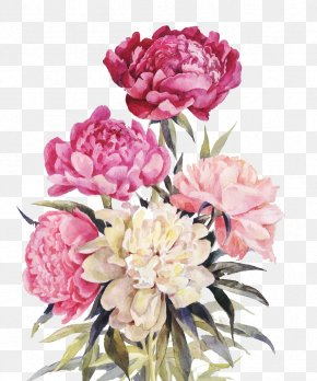Pink And Red Flowers - Peony Flower Bouquet Illustration PNG