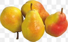 Pear Image - Pear Fruit Amygdaloideae TIFF PNG