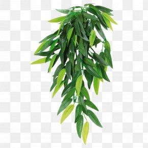Plant - Houseplant Reptile Hanging Basket PNG