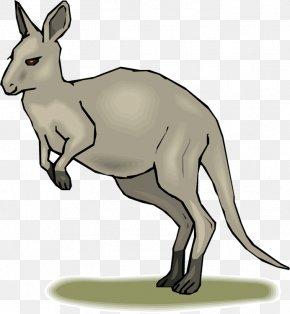 Kangaroos Cliparts - Blog Free Content Clip Art PNG