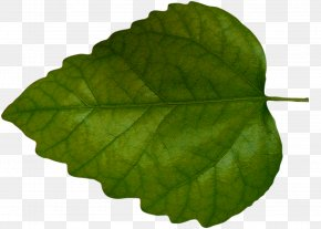 Green Leaves - Leaf Green Clip Art PNG