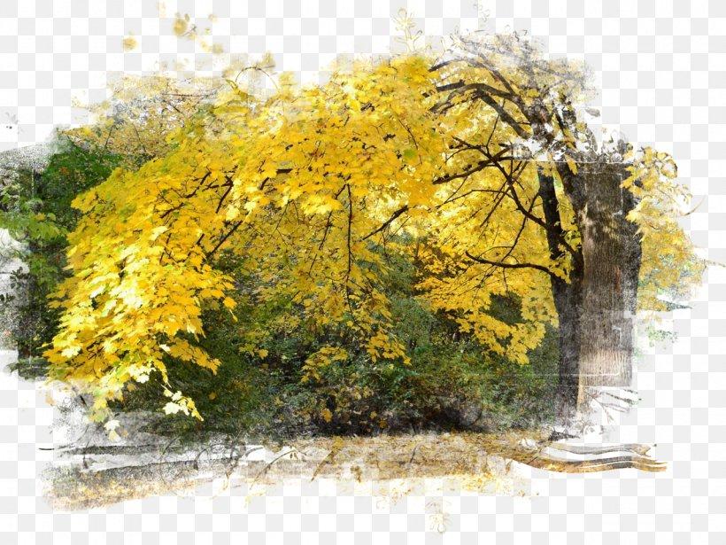 Autumn Season Desktop Wallpaper Photography Png 1280x960px Autumn Branch Desktop Metaphor Digital Image Display Resolution Download