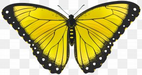 Yellow Butterfly Transparent Clip Art Image - Butterfly Yellow Clip Art PNG