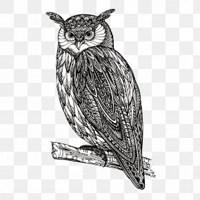 Owl - Owl Royalty-free PNG