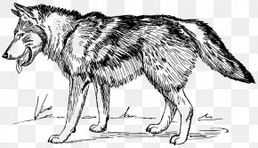 Sketch Wolf - Arctic Wolf Black Wolf Clip Art PNG