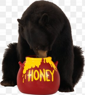 Brown Bear Eats Honey Image - Brown Bear Honey PNG