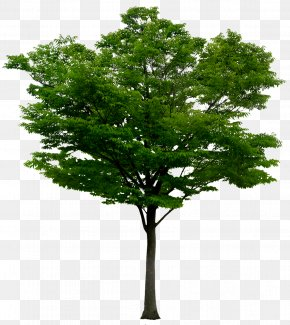 Birch Tree River - Adobe Photoshop Image Psd Tree PNG