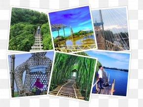 Mangroves - Nglinggo Tea Plantation Waduk Sermo Mount Merapi Tourist Attraction Tourism PNG
