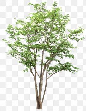 Tree - Tree Citxe9 Joie Socixe9txe9 Coopxe9rative Computer File PNG