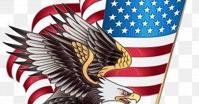 Golden Eagle Falconiformes - Veterans Day Celebration Background PNG