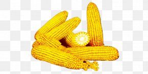 A Pile Of Corn - Corn On The Cob Yellow Commodity PNG
