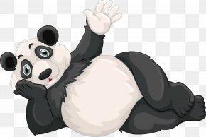 A Lying Giant Panda - Giant Panda Red Panda Cartoon Illustration PNG