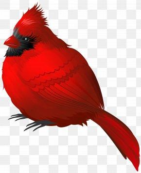 Red Winter Bird Clipart Image - Winter Bird Clip Art PNG
