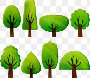Vascular Plant Grass Family - Green Leaf Clip Art Grass Plant PNG