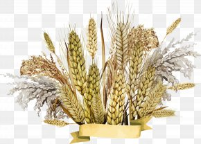 Wheat - Emmer Cereal Germ PNG