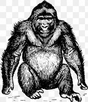 Apes Vector - Ape Gorilla Orangutan Chimpanzee Drawing PNG