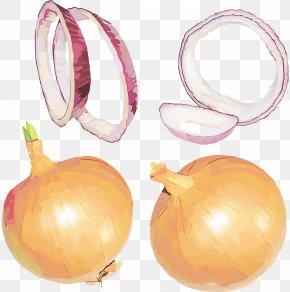Amaryllis Family Pearl Onion - Yellow Onion Vegetable Onion Plant Allium PNG