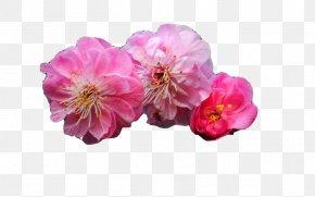 Three Peach - Plum Blossom Desktop Environment Bamboo Wallpaper PNG