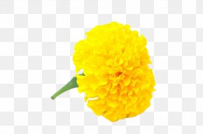 Yellow Handle With Marigold - Mexican Marigold Flower Yellow Calendula Officinalis Chrysanthemum PNG