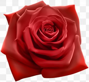 Red Rose Clipart Image - Rose Stock Illustration Stock Photography Illustration PNG