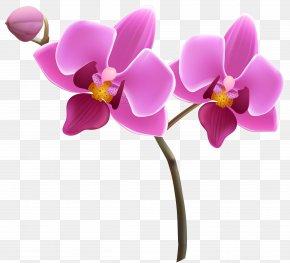 Purple Orchid Clipart Image - Orchids Purple Clip Art PNG