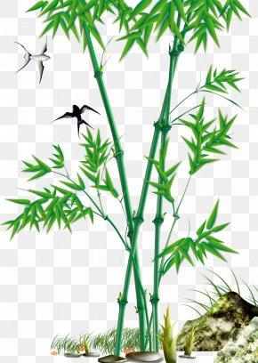 Bamboo - Bamboo Download Bambusa Oldhamii PNG