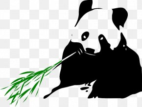 Panda Bear Family - Giant Panda Bear Red Panda Clip Art Bamboo PNG