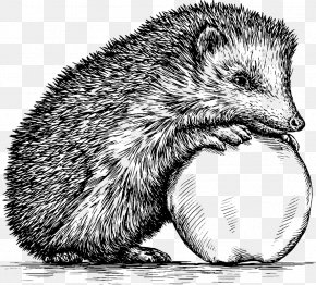 Hand Drawn Sketch Hedgehog - Hedgehog Drawing Royalty-free Illustration PNG