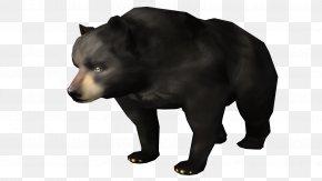 Bear - Grizzly Bear American Black Bear Brown Bear Fur PNG