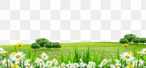 White Flowers Grass Border Texture - Lawn Flower PNG