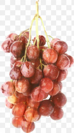 Vitis Plant - Grape Cartoon PNG