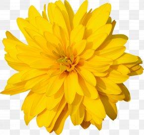 Yellow Flower - Calendula Officinalis Dandelion Marigold Orange Clip Art PNG
