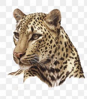 Leopard Photos - Lion Felidae Cheetah Cat PNG