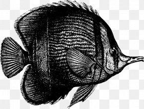 Coral Vector - Tropical Fish Animal Clip Art PNG