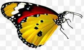 Yellow Background - Butterfly Desktop Wallpaper B. Butterflies Display Resolution PNG