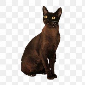 Brown Cat - Bombay Cat Korat German Rex Domestic Short-haired Cat Black Cat PNG