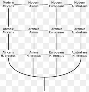 Civilization Homo - Multiregional Origin Of Modern Humans Recent African Origin Of Modern Humans Human Evolution Homo Sapiens Archaic Humans PNG