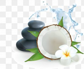 SPA Leisure Club Creative - Coconut Water Illustration PNG
